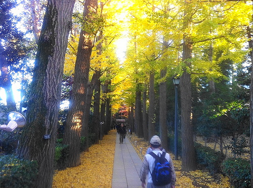 荻窪散歩 ~~ラーメン、買い物、大田黒公園の紅葉散策~~