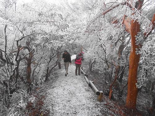 冬の天城山 樹氷美しき日帰り雪山登山
