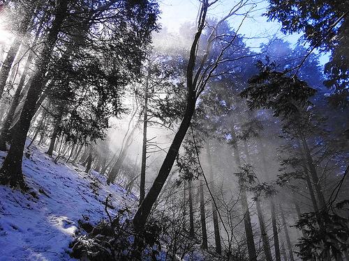 【秀麗富嶽十二景】高畑山・倉岳山 初心者向け入門雪山登山