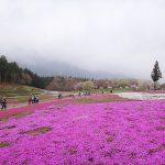【奥武蔵】伊豆ヶ岳 日帰り登山と秩父・羊山公園の芝桜