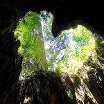 屋久島の旅(2日目) 白谷雲水峡~もののけの森~ウィルソン株~縄文杉