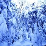 冬の天狗岳(渋の湯 ― 天狗岳 ― 黒百合ヒュッテ ― 高見石)  1泊2日雪山登山