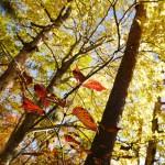 飯縄山の紅葉