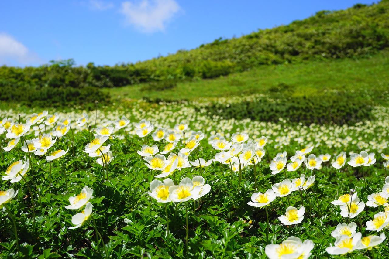 秋田駒ヶ岳~乳頭山 ムーミン谷のお花畑と展望豊かな稜線登山