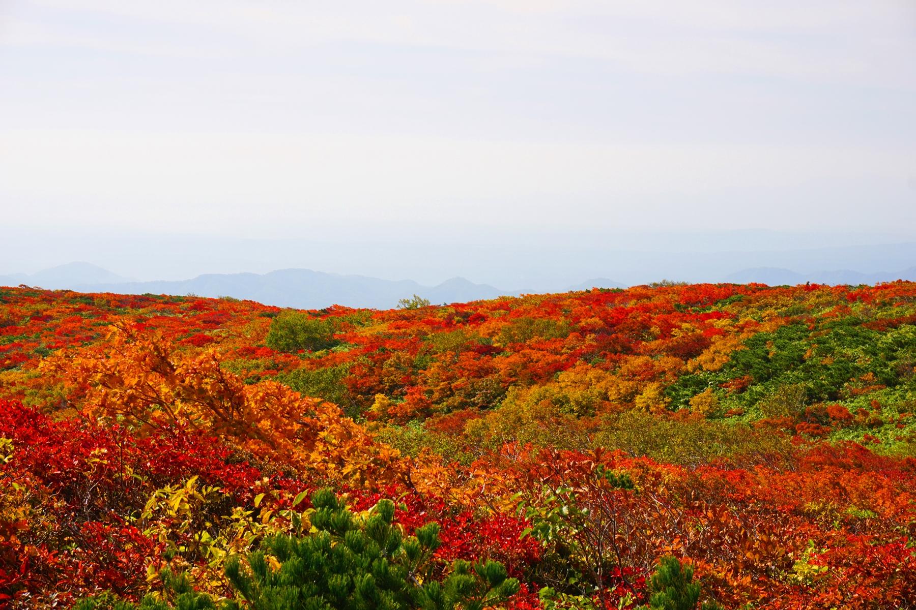 栗駒山(東北) 秋の紅葉登山 ~~山を真っ赤に染める日本屈指の紅葉~~