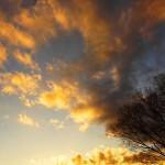 高尾山 紅葉登山 ~~夕日と富士山の絶景~~
