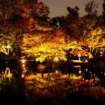 大田黒公園 静寂な日本庭園と紅葉ライトアップ