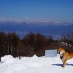 守屋山山頂と柴犬