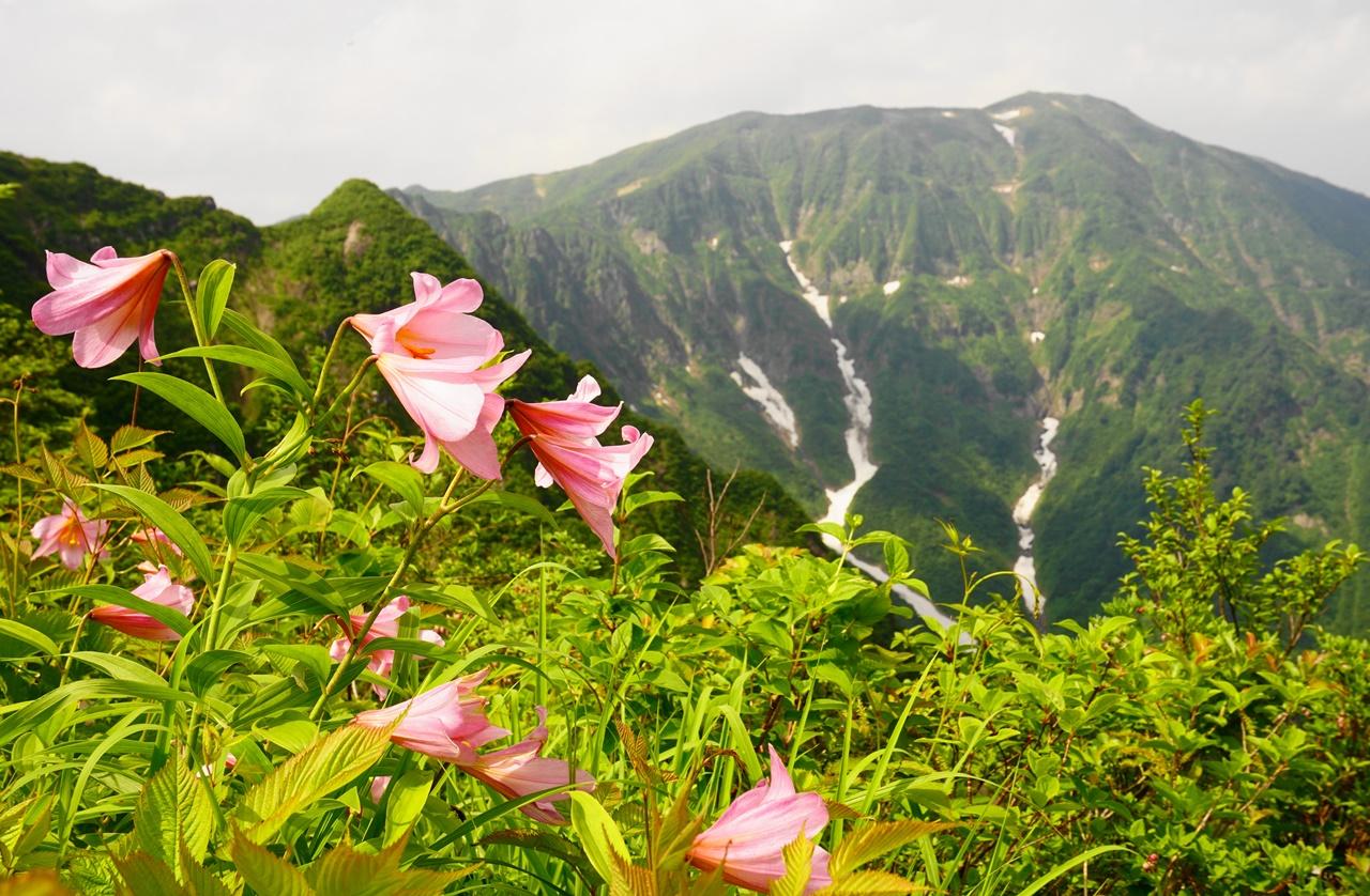 浅草岳 ヒメサユリの大群生と大岩壁の稜線登山(六十里越~鬼ヶ面山)