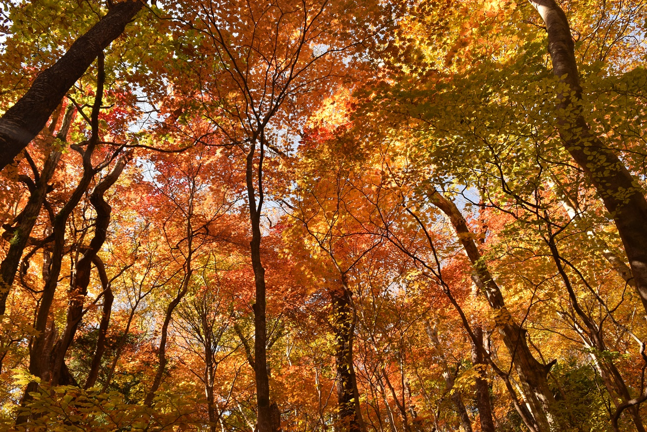 八溝山 日帰り登山 茨城県の最高峰・圧巻の紅葉風景と大展望