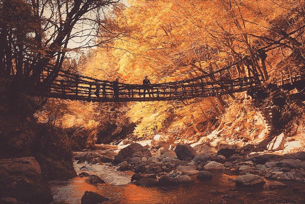 【徳島】奥祖谷二重かずら橋 紅葉とエメラルドグリーンの祖谷渓谷