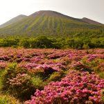 【九州】高千穂峰(霧島山) 満開のミヤマキリシマと雲海・ご来光登山