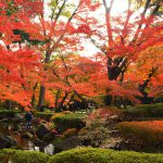 【荻窪】大田黒公園の紅葉風景 見頃を迎えた華やかで静寂な日本庭園