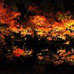 【荻窪】大田黒公園 紅葉のライトアップ