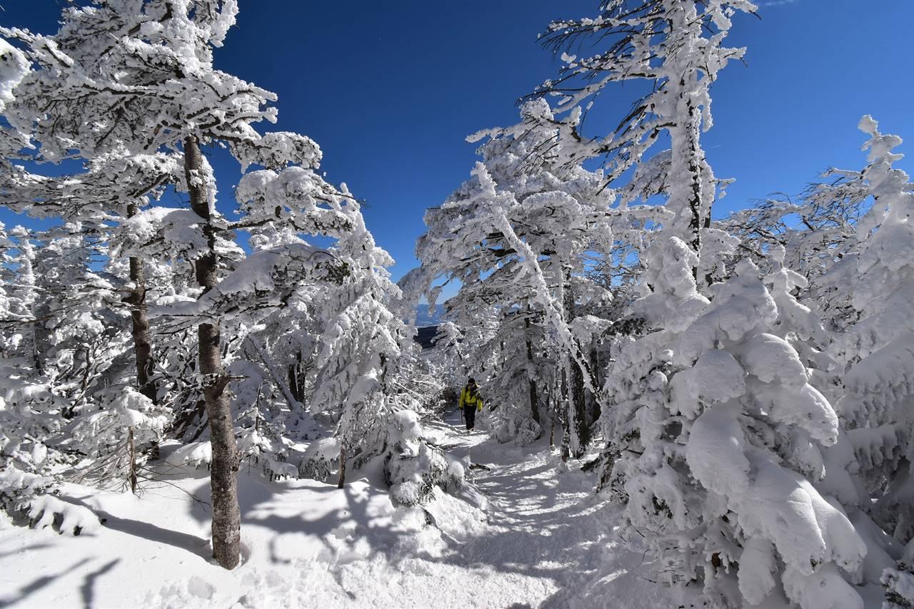 【北八ヶ岳】北横岳 雪山入門の山へ日帰り登山(電車・バス利用)