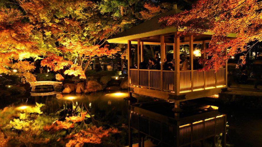 【荻窪】大田黒公園 紅葉ライトアップ 幻想的な庭園風景!