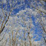 陣馬山~高尾山 東京でまさかの霧氷天国!冬の雪山登山