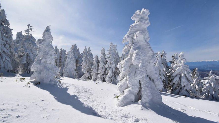 【長野】冬の根子岳 樹氷・スノーモンスター広がる雪山登山