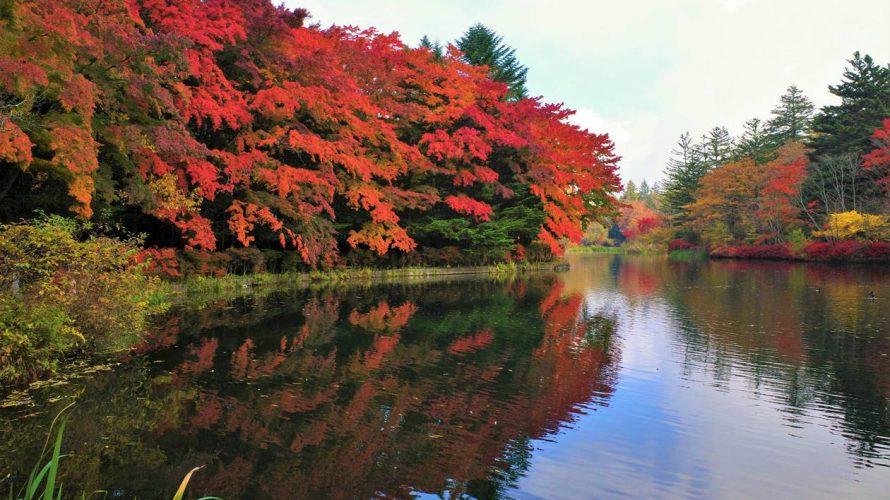 【軽井沢】雲場池の紅葉 駅から徒歩で行ける観光スポット