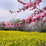3月のおすすめ登山 雪山から春の花旅ハイキング