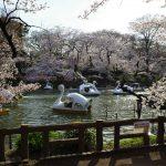 【吉祥寺】井の頭公園の桜、そしてahamoにする