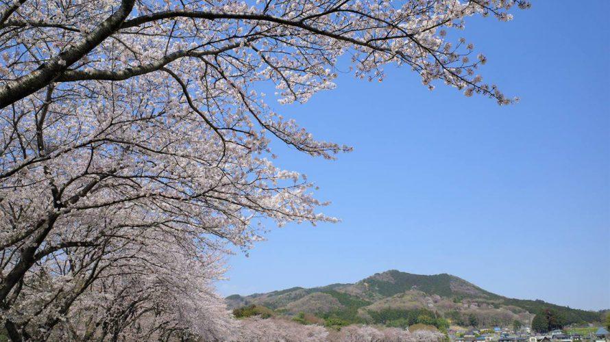 【埼玉】天覧山~巾着田~日和田山 満開の桜とツツジの登山