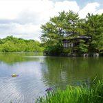 【練馬】石神井公園 都会の尾瀬!?水と緑豊かなオアシス