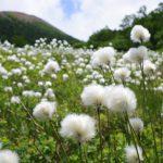 高山植物咲く花の登山ルーティン
